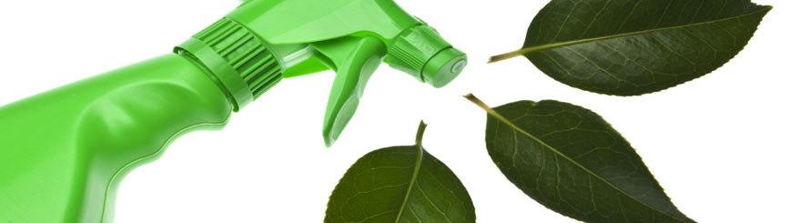 10 Consejos Para Una Limpieza Verde Del Hogar