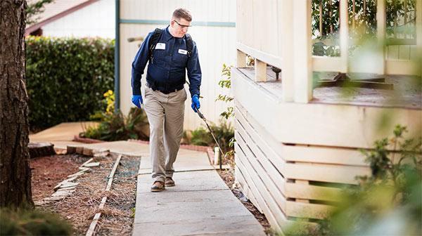 prevenir plagas cerca de casa