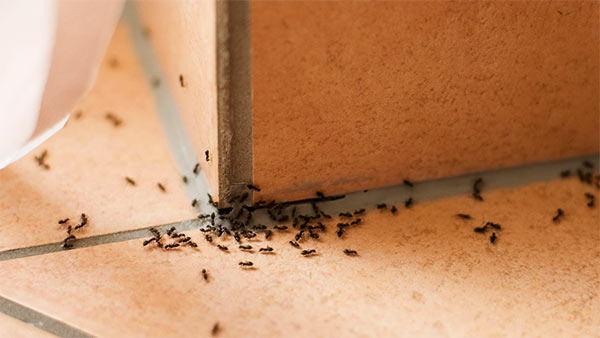 prevenir plaga de hormigas