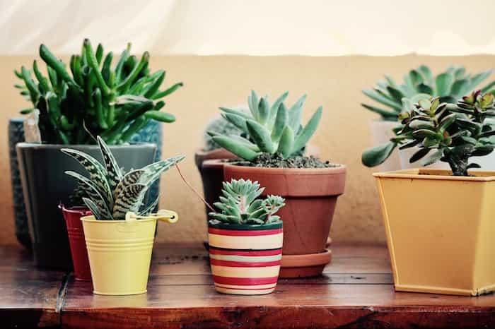 Terraza limpia, ordenada y decorada con plantas