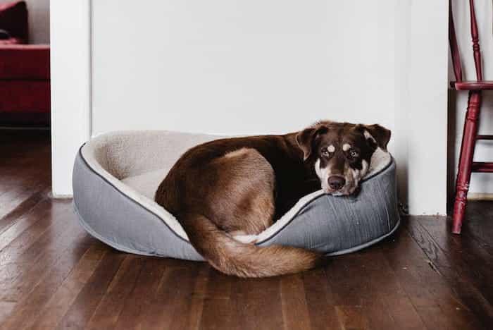 Un perro tumbado en una cama para perros muy limpia