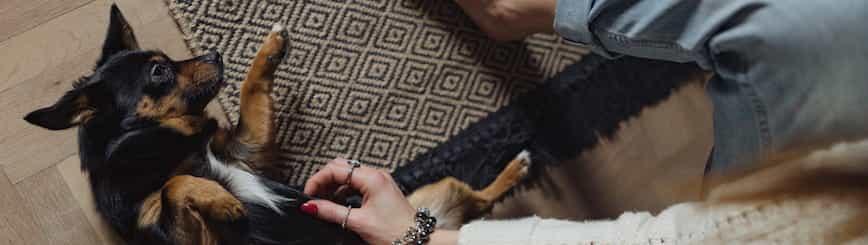 Cómo Desinfectar La Casa Cuando Se Tienen Perros